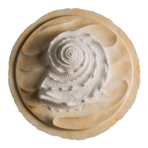 The Oceanside Shell White Biodegradable Urn