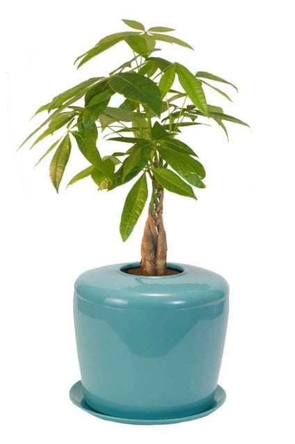 Indoor Plant Urn For Ashes